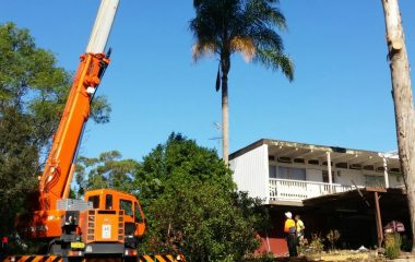 Tree Cutting & Moving Services