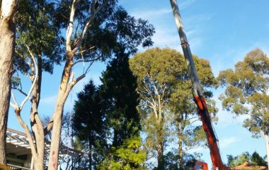 Tree Branchs Sutting Services