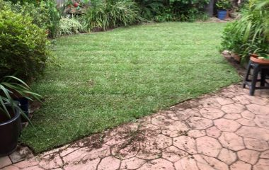 Soft Landscaping in backyard