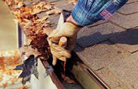 Tree stump removals in Sydney