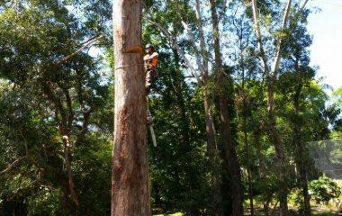 Tree_Services-10