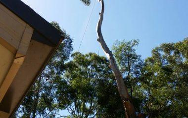 Tree_Services-13