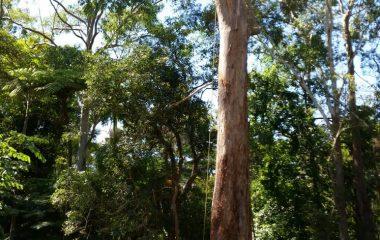 Tree_Services-14