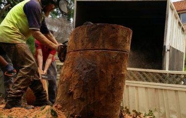 A Man Tree Cutting Tree Stump