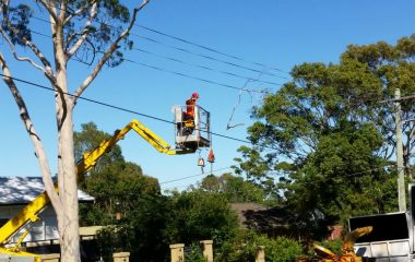 Affordable Tree Cutting Services in Sydney