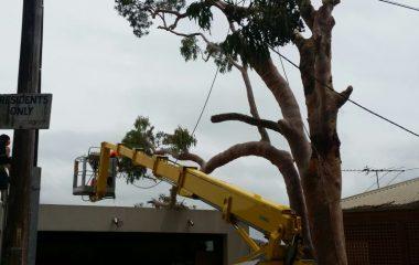 Sydney Tree Cutting Services