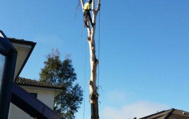 Tree_Services-3
