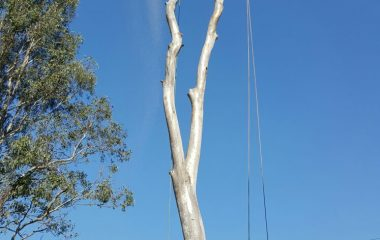 Tree Branch Cutting Services 5