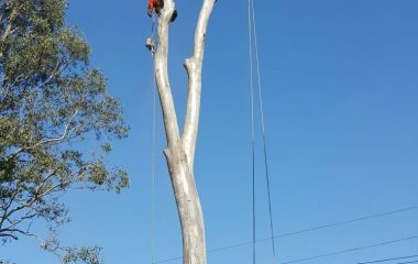 Tree Branch Cutting Services 4
