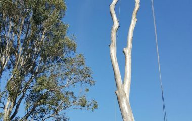 Tree Branch Cutting Services