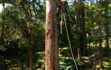 Tree_Services-7