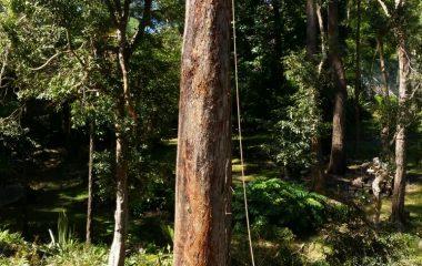 Tree_Services-8