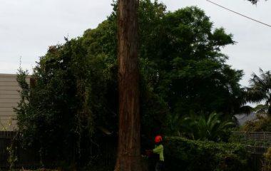 Tree_Services-9