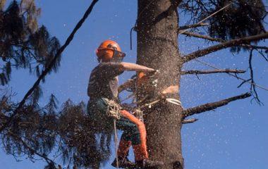 Tree Cutting - 3