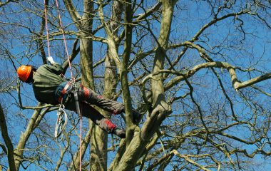 Tree Lopping Services - 6