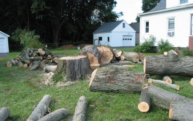 Tree Cutting Experts