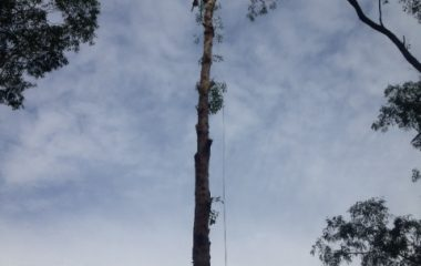 Tree Removal Services - 6