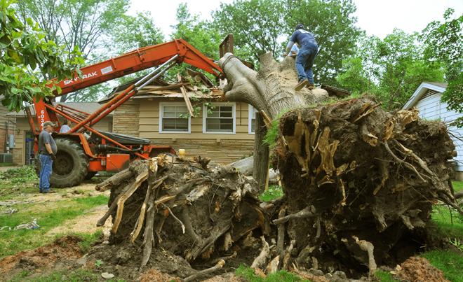 Tree Removal in Granville