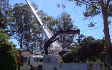 Tree Removal Services - 4