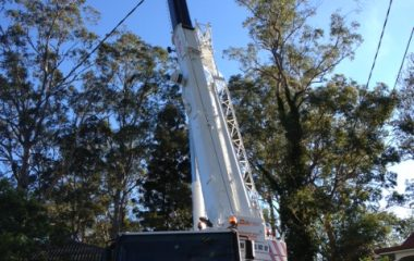 Tree Removal Services - 5