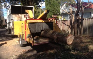Tree Cutting Services - 1