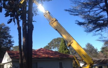 Tree Removal Services - 2