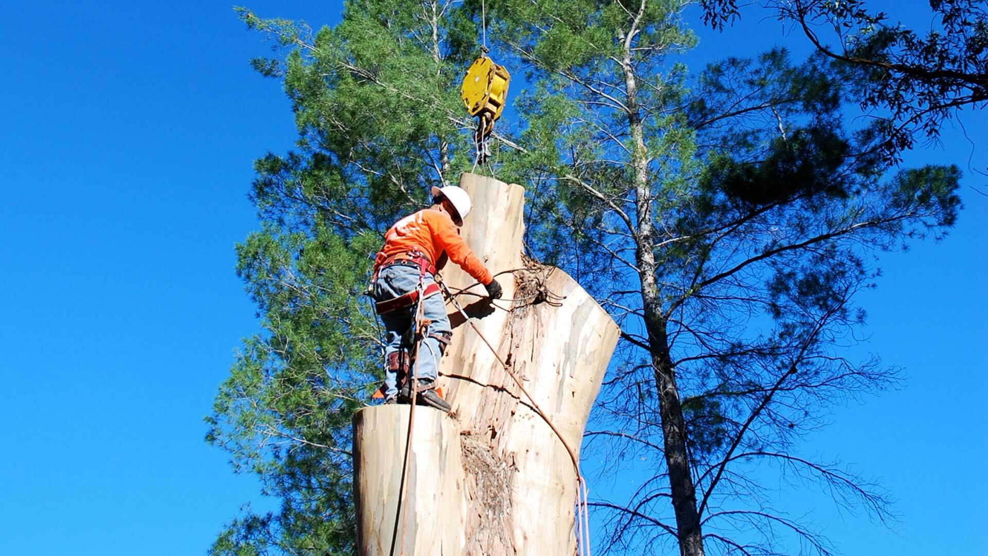 Tree Cutting Sydney